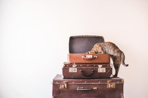Neugierige katze sitzt auf weinlesekoffern gegen den hintergrund einer hellen wand. rustikaler retro-stil
