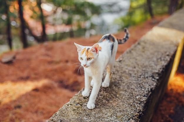 Neugierige weiße katze der straße, die im park geht