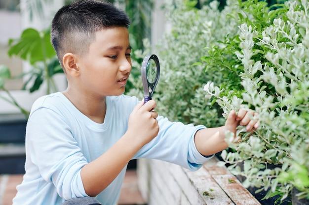 Neugieriger asiatischer junge mit lupe, der blätter des busches im hinterhof betrachtet