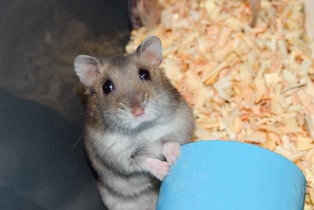 Neugieriger hamster