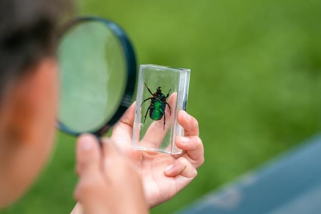 Neugieriger schuljunge studiert käfer durch lupe im freiluftpark