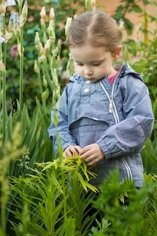 Neugieriges dreijähriges kleinkindmädchen, das gartenpflanzen im freien berührt