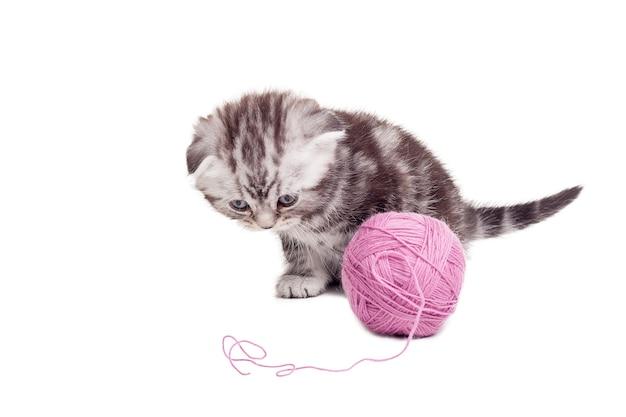 Neugieriges kleines kätzchen. süßes schottisches faltkätzchen, das in der nähe des wollgewirrs sitzt und es anschaut
