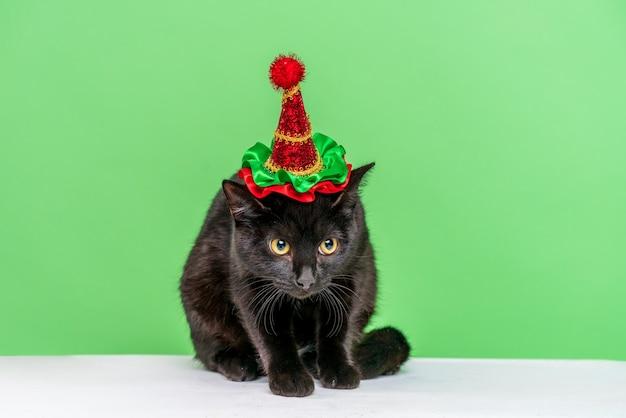 Neujahr süße schwarze schöne katze auf grünem hintergrund neujahrsstimmung