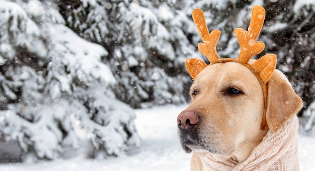 Neujahrs- und weihnachtskonzept mit hund, der rentiergeweih trägt. banner.