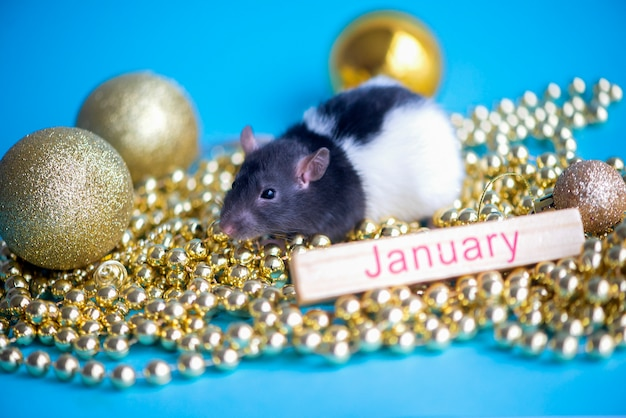 Neujahrskarte. symbol der ratte des neuen jahres 2020 mit goldenem flitter des weihnachtsdekors auf blauem januar