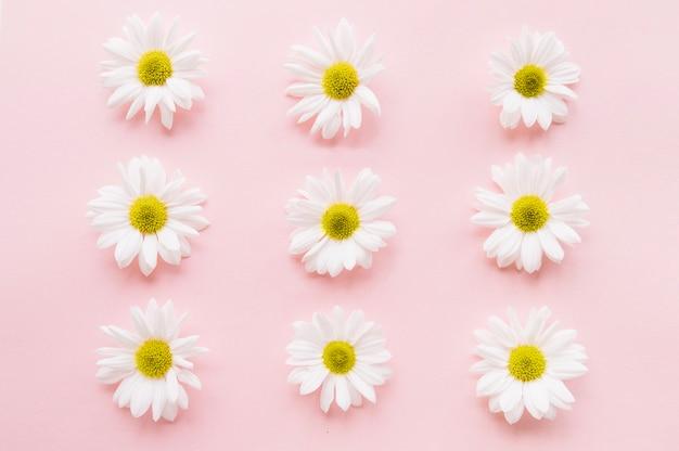 Neun gänseblümchen in drei reihen und drei linien