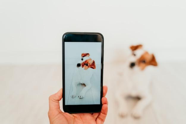 Nicht erkennbare frau, die ein foto mit handy des niedlichen jack russell-hundes zu hause macht. technologie- und haustierkonzept