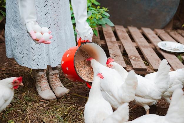 Nicht erkennbare weiße gummihandschuhe der frau, die eier sammeln, die getreide vom roten topf zu freilandhühnern vom hühnerstall füttern. gesunder bio-lebensstil. legehennen und heimische landwirtschaft im dorf.