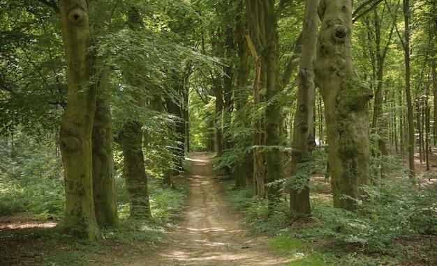Niederländische natur