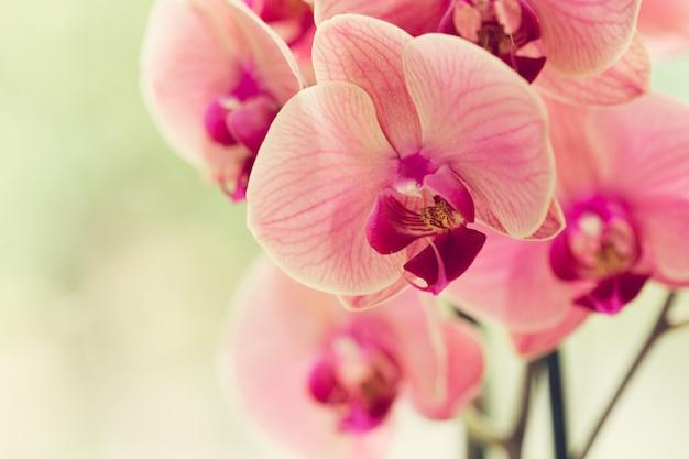 Niederlassung des blühenden rosa orchideenabschlusses oben