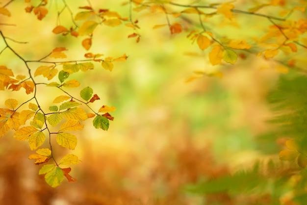 Niederlassungen von herbstbäumen auf einem unscharfen hintergrund