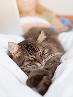 Niedliche getigerte katze, die im bett sickert.