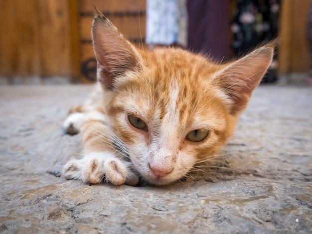 Niedliche heimische orange katze, die auf dem boden liegt