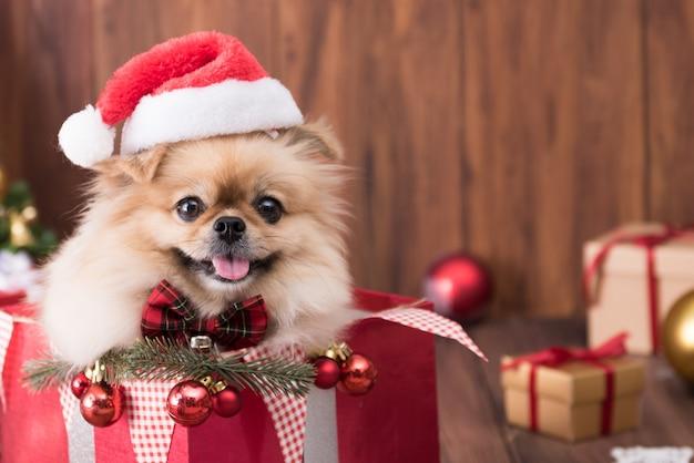 Niedliche hundewelpen pommersche tragende weihnachtsmannmütze in der geschenkbox
