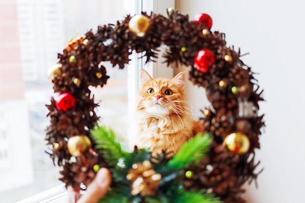 Niedliche ingwerkatze schaut durch handgemachten weihnachtskranz, gemacht von den pinecones und von den dekorationen. flauschiges haustier hilft, nach hause zum neuen jahr zu verzieren.