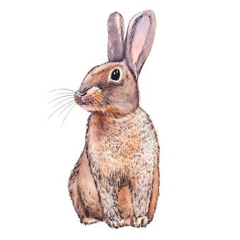 Niedliche kaninchen-tieraquarellillustration. ostern eingestellt. handgemalte karte mit traditionellen symbolen lokalisiert auf weißem hintergrund. nette babykaninchenillustration für entwurf.
