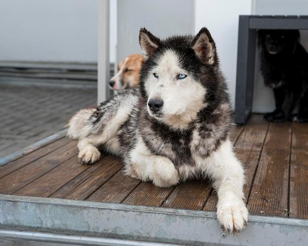 Niedliche rettungshunde im tierheim warten darauf, adoptiert zu werden
