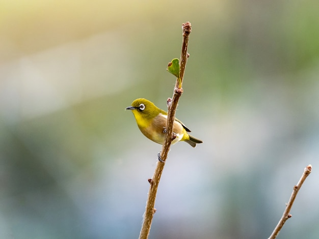 Niedlicher exotischer vogel, der auf einem ast in der mitte eines waldes steht