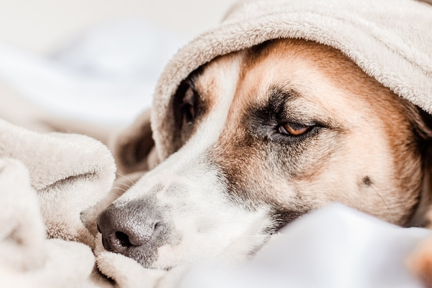 Niedlicher hund, der auf bett unter einer decke stillsteht