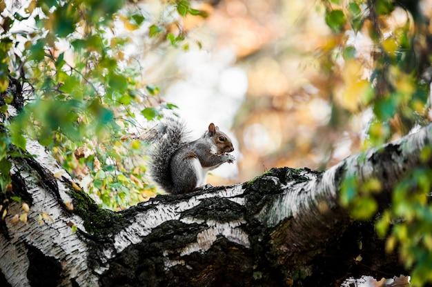 Niedliches eichhörnchen, das auf dem moosigen baumstamm mit unscharfem hintergrund sitzt