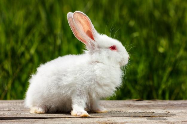 Niedliches kleines weißes kaninchen auf einem grünen hintergrund, sitzt auf einem holzbrett