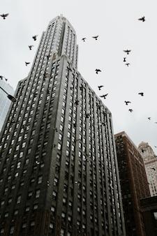 Niedrig abgewinkelter schuss eines wolkenkratzers in chicago mit tauben, die in der nähe fliegen
