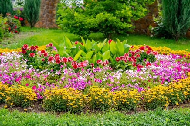 Niedrig wachsende krautige pflanzen mit schönen zartrosa blüten. landschaftsdesign.