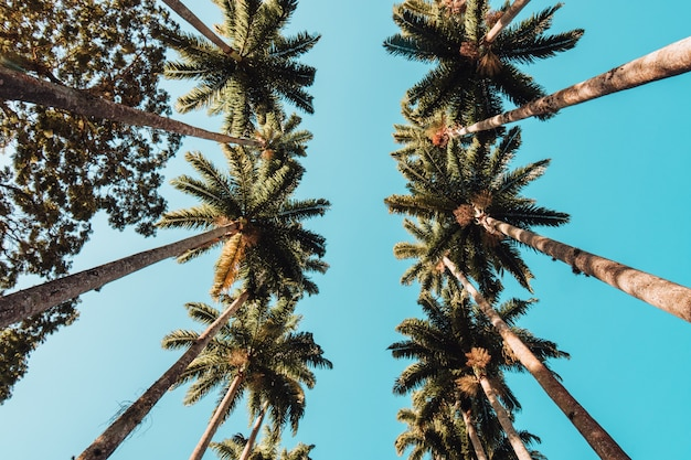 Niedrige winkelansicht von palmen unter dem sonnenlicht und einem blauen himmel in rio de janeiro
