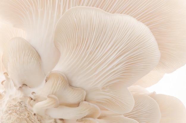 Niedrige winkelsicht der weißen nahaufnahme des pilzes