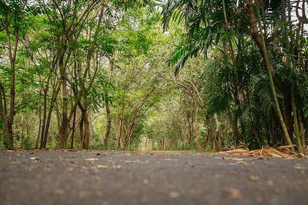 Niedrige winkelsicht des schattigen üppigen grünen tropischen waldes im sommer, thailand.