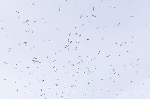 Niedrige winkelsicht von den seemöwen, die in himmel fliegen