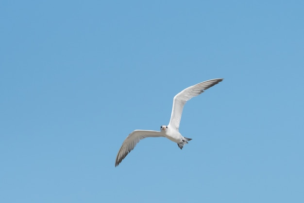 Niedriger blickwinkel auf die weiße möwe, die an einem sonnigen sommertag im klaren blauen himmel aufsteigt