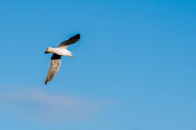 Niedriger winkelschuss einer möwe, die im schönen blauen himmel fliegt, der in malta gefangen genommen wird