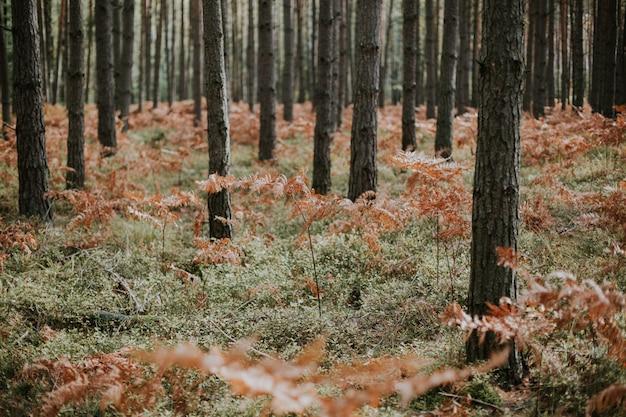 Niedriger winkelschuss von trockenen straußenfarnzweigen, die in einem wald mit hohen bäumen wachsen