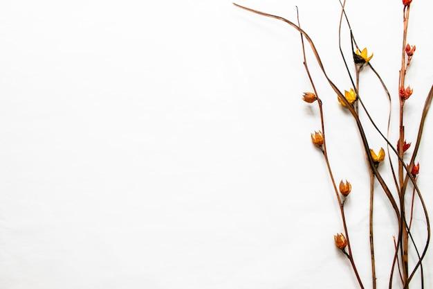 Noch naturblumen im weißen hintergrund