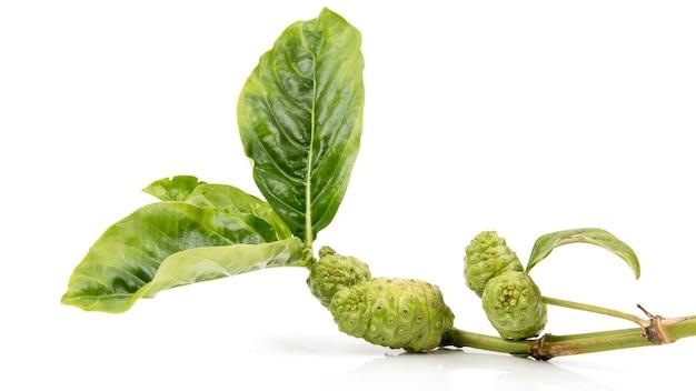 Noni früchte und grüne blätter isoliert.