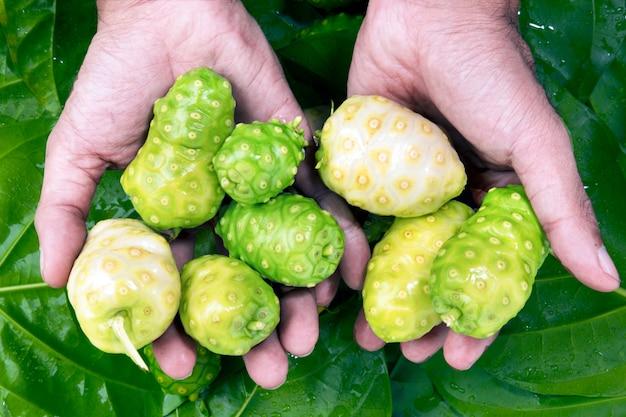 Noni indische maulbeerfrucht auf grünem blatthintergrund.