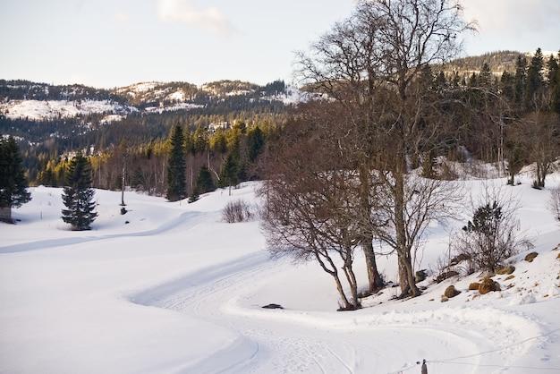 Norwegen schnee landschaften wald berge