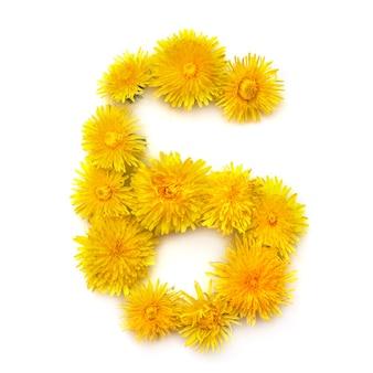 Nummer 6 der leuchtend gelben löwenzahnblüten, auf weißem hintergrund isolieren