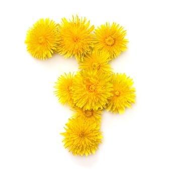 Nummer 7 von leuchtend gelben löwenzahnblüten, auf weißem hintergrund isolieren