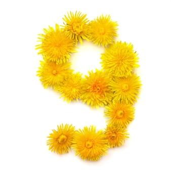 Nummer 9 von leuchtend gelben löwenzahnblüten, auf weißem hintergrund isolieren