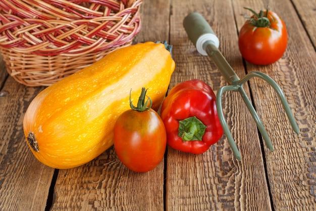Nur gepflückter kürbis, tomaten und paprika mit einem weidenkorb und handrechen auf alten holzbrettern. gerade geerntetes gemüse. ansicht von oben.
