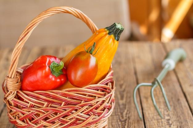 Nur kürbis, tomaten und eine paprika in einem weidenkorb gepflückt und ein handrechen auf den alten holzbrettern. gerade geerntetes gemüse.