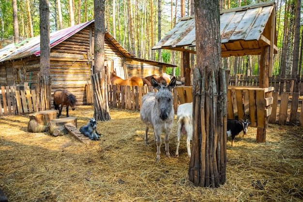 Nutztiere in einem privaten kontaktzoo-huskyland in kemerovo, russland