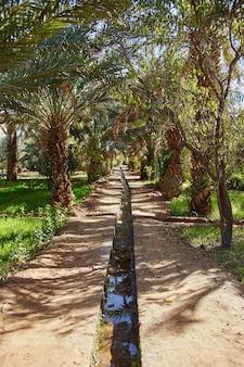 Oase in der wüste. bewässerung von land in den sahara sands Premium Fotos