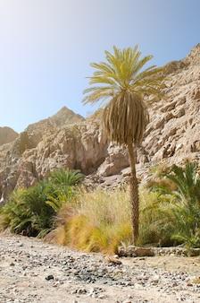 Oase mitten in der wüste von sinai in ägypten
