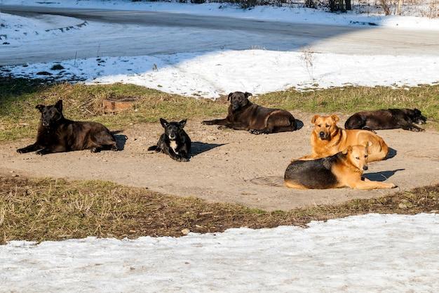 Obdachlose hunde im winter heizen auf sanitäranlagen gut auf. streunende hunde, die sich im winter bei kaltem wetter auf der abwasserluke aalen