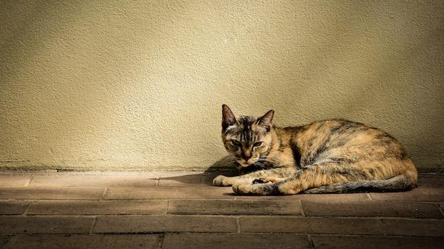 Obdachlose katze langweilt sich