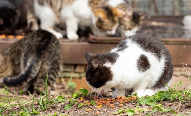 Obdachlose katzen auf einer stadtstraße. menschen füttern verlassene tiere.